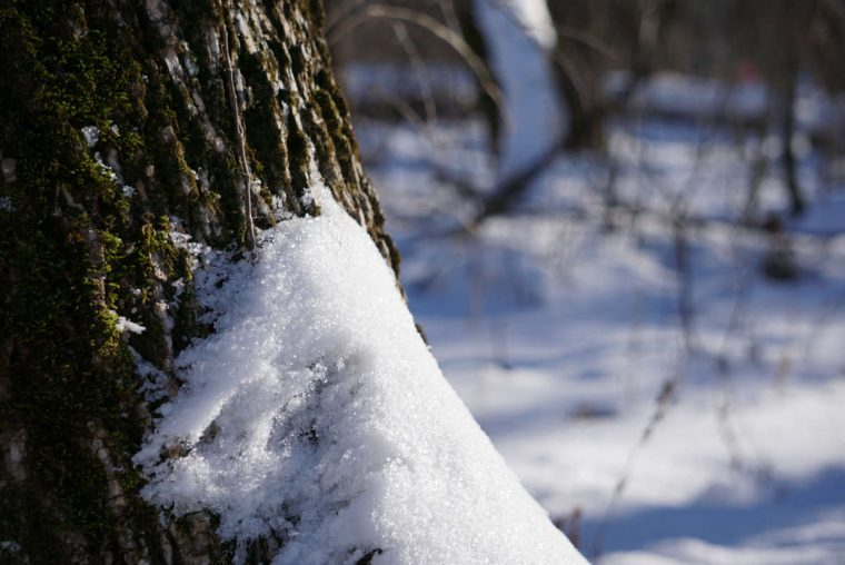 Safe - Snowy Treescape